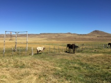 Buta Mallin - the beginning and the end of my horseriding trip