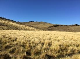 Patagonian Grasslands