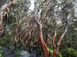 Parque Nacional las Cajas