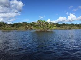 Die Lagune mit den Mangroven im Hintergrund, hier in der Nähe gingen wir schwimmen