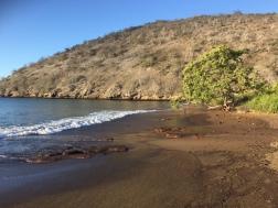 Cormorant Point - Floreana