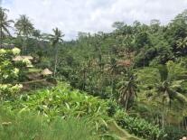 Somwhere on the Campuan Ridge walk