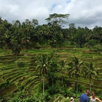 Tegalang Rice Terraces