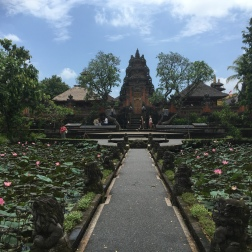 Lotus Garden behind the Lotus Cafe