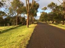Spaziergang im Sonnenuntergang und bei heftigem Wind - ein Teil der Baumkrone fiel mitten über den Weg