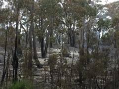 Brände Richtung Ansons Bay