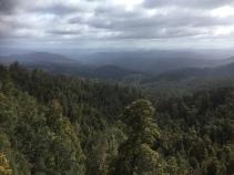 Hartz Mountains