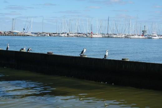 Fischtaucherli