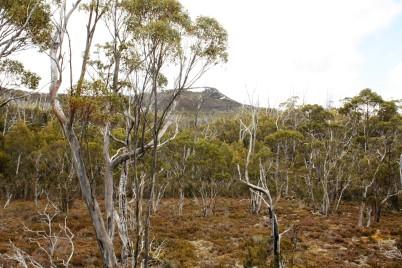 Mount Rufus durch die Baumlandschaft inkl. Schnee