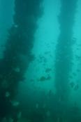 Die Aussicht unter Wasser