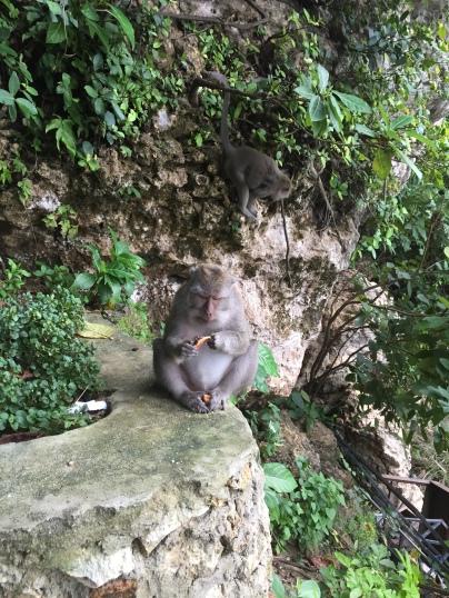 Typisch für Bali, gierige Affenbande
