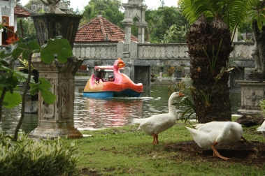 Ente aus Plastik und Ente(n) live