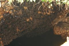 Fledermaushöle